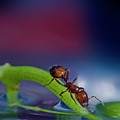 Ant In A Colorful World by Bob Rasulev
