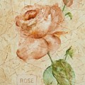 Antique Rose by Debbie Lewis