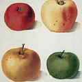Apples by Granger