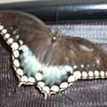 Aqua Wings by Warren Thompson