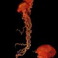 Aquatic Aliens  by Shelley Jones