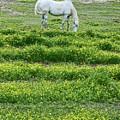 Arabian by Beebe  Barksdale-Bruner