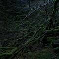 Arboreal Forest by Jim Thomson