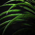 Arcs Of Green by Barbara  White