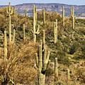 Arizona Desert by Renee Hong