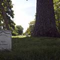 Arlington Cemetery by Erik Berglund