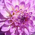Art Prints Dahlia Flower Decorative Art Garden Baslee by Baslee Troutman