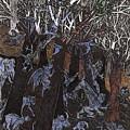 Asil In Shitaki Forest by Al Goldfarb