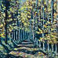 Aspen Path by Steve Lawton