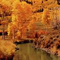 Aspen Stream by Linda Weyers