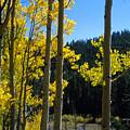 Aspen Vista by Jerry McElroy