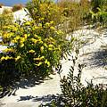 Assateague Beach 5 by Alan Hausenflock