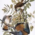 Audubon: Kestrel, 1827 by Granger