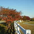 Autumn Afternoon With Shadows by Anne-Elizabeth Whiteway