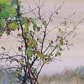 Autumn Birch By Sand Creek by Carolyn Doe