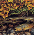 Autumn Brown Trout by JQ Licensing