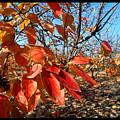 Autumn Colors 06 by Arik Baltinester