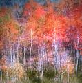 Autumn Forest by Tara Turner