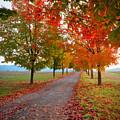 Autumn Journey by Idaho Scenic Images Linda Lantzy