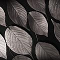 Autumn Leaves by Eena Bo
