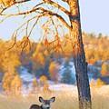 Autumn Light ... Montana Art Photo by GiselaSchneider MontanaArtist