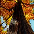 Autumn Majesty by Liz Borkhuis