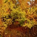 Autumn Palette by Carol Cavalaris