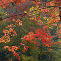 Autumn Palette by Neil Doren