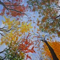 Autumn Sky by Lizzy Forrester