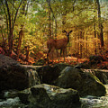 Autumn Splendor by Kathleen Holley