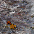 Autumn Stream by Gae Helton