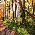 Autumn Trail by Debra and Dave Vanderlaan