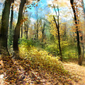 Autumn Trail by Gina Signore
