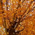 Autumn Tree by Sherri Williams