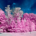 Autumn Trees In Infrared by Louis Dallara