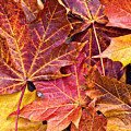 Autumnal Carpet by Meirion Matthias