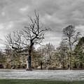 Autumns End by Bel Menpes