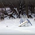 Back Yard With Deer Herd by Emily Kelley