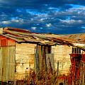 Backyard Australia by Tim Nichols