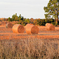 Bales by Rosalie Scanlon