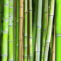 Bamboo Background by Carlos Caetano