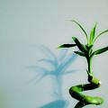 Bamboo by Spadafora Photography