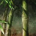Bamboo Stalks by Steve Goad
