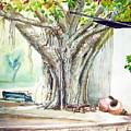 Banyan Tree by Prabhu  Dhok
