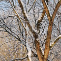 Bare Branches by Trudi Southerland