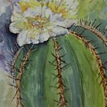 Barrel Cactus In Bloom by Marilyn Barton