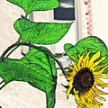 Barrio Sunflower by Sarah Loft