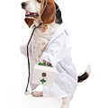 Basset Hound Dog Dressed As A Veterinarian by Susan Schmitz