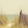 Beach Fence In Grassy Dune South Carolina by Stephanie McDowell