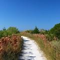 Beach Path by Gary Wonning